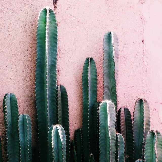 Cactus love! #cactus #pink