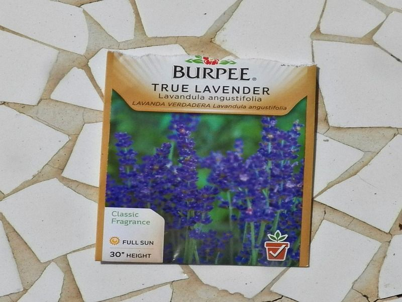 How to Grow Lavender from Seed - Mike's Backyard Nursery ...