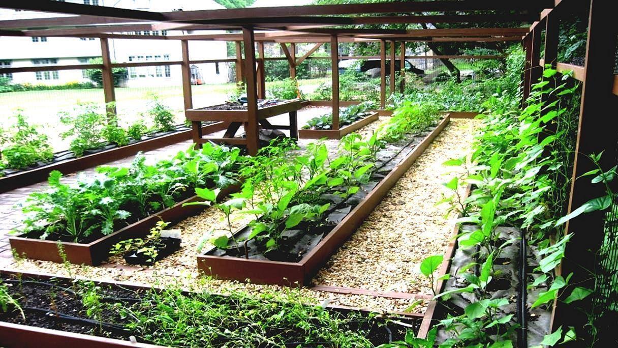 Urban Vegetable Garden | Vegetable garden design, Small ...