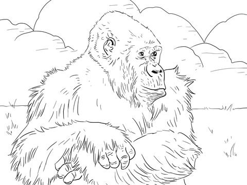 Mountain Gorilla Coloring Page From Gorillas Category Select From