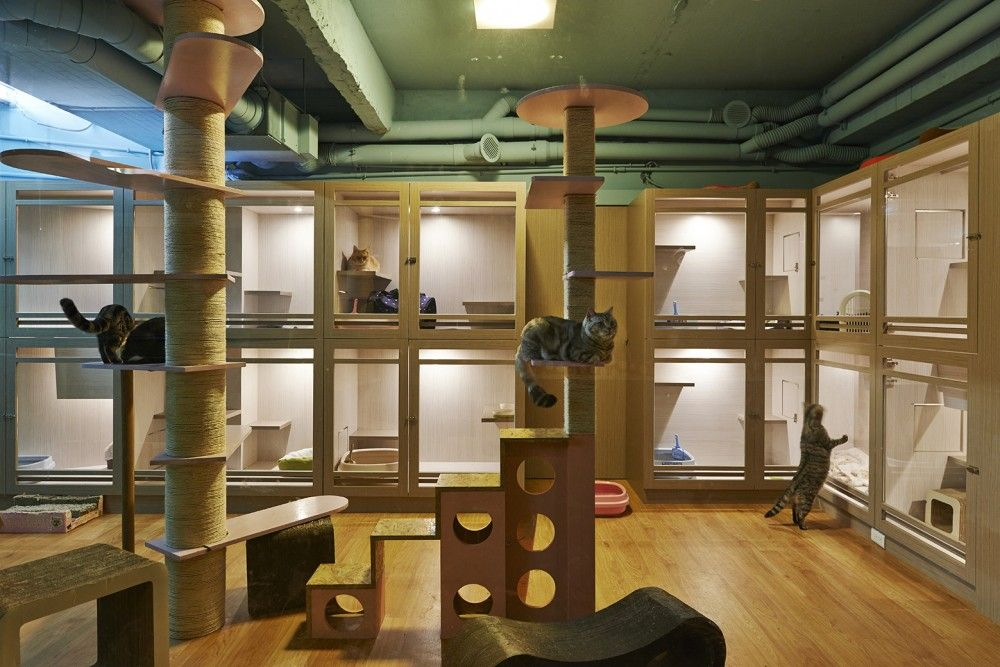 Gallery of Petaholic Hotel / sms design 6 Animal