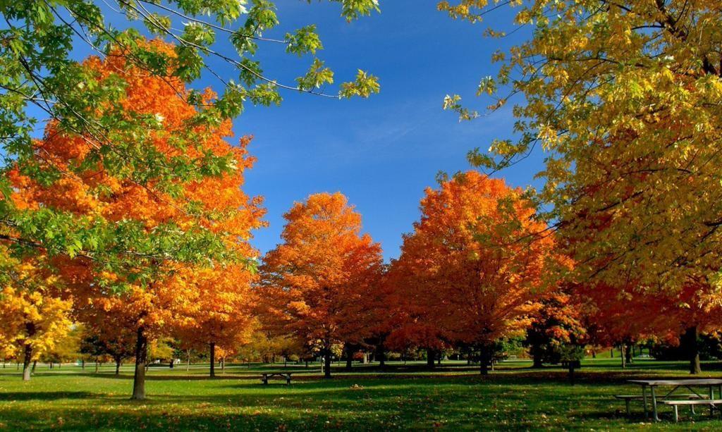 Seja Bem vindo Outono*)