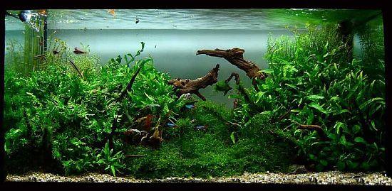 Aquascape Driftwood 2