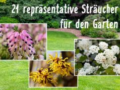 Strauch: 21 repräsentative Arten für jeden Garten - Gartendialog.de