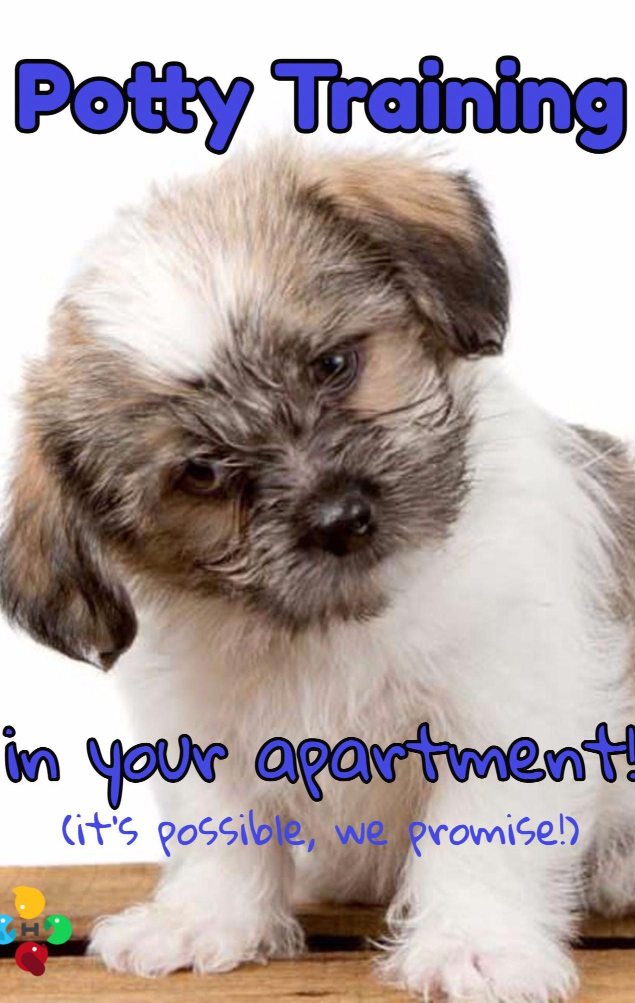 How To Potty Train Your New Puppy When You Live In An Apartment