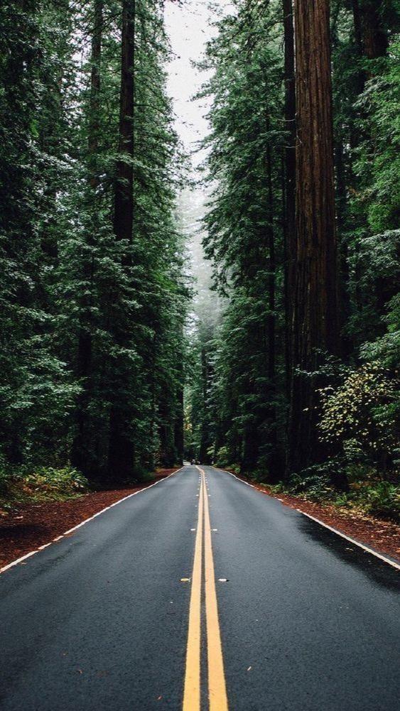 beautiful nature road