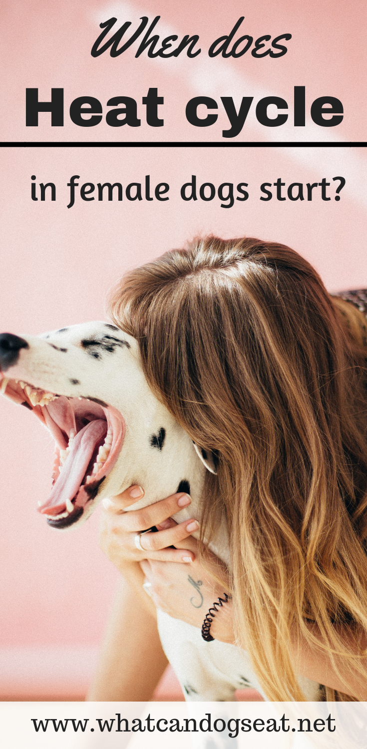 When Does Heat Cycle In Female Dogs Start Dog In Heat Natural Dog Care Dogs