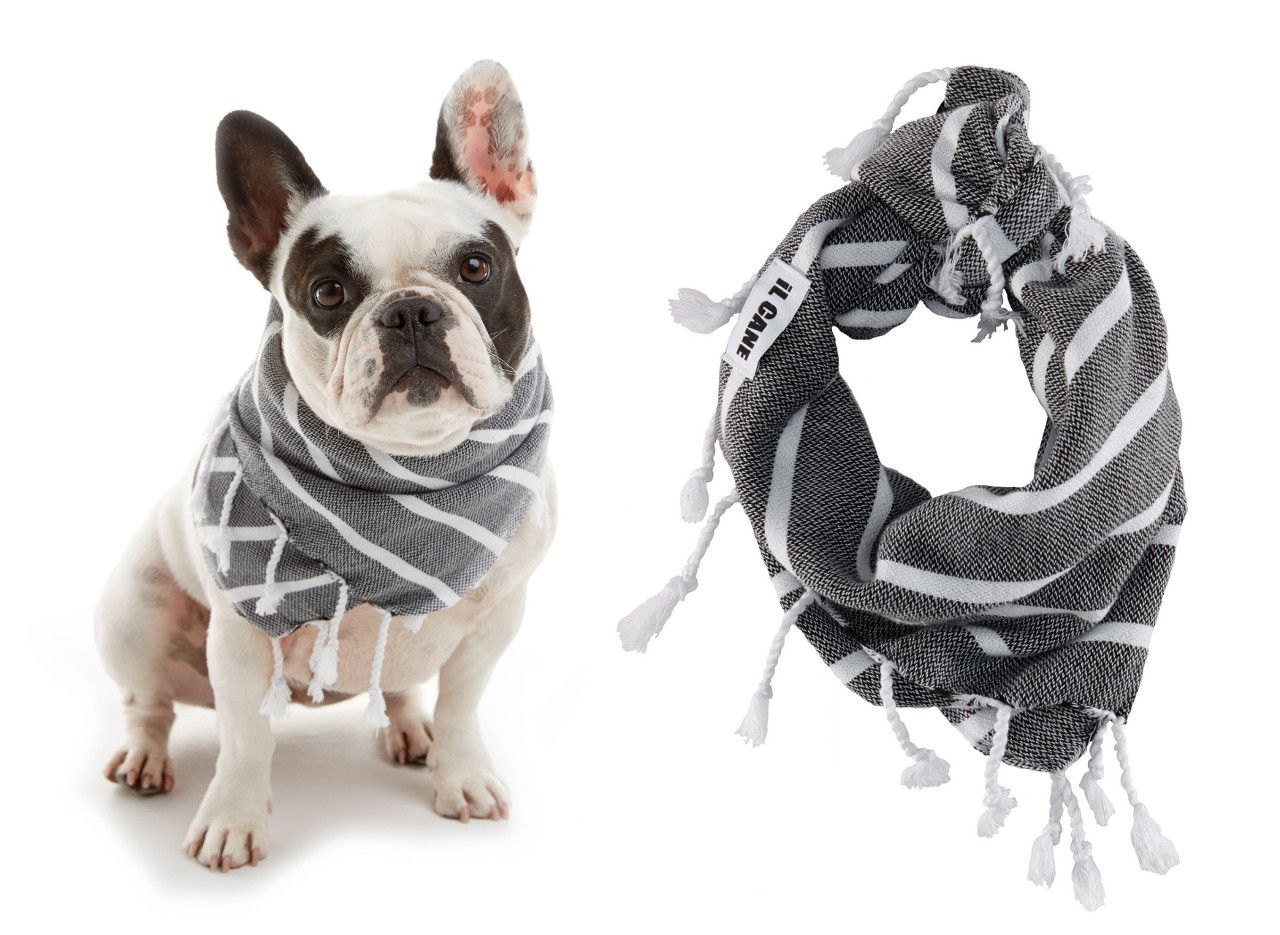 Modern Dog Accessories From Il Cane Modern Dog Dog Clothes Dog