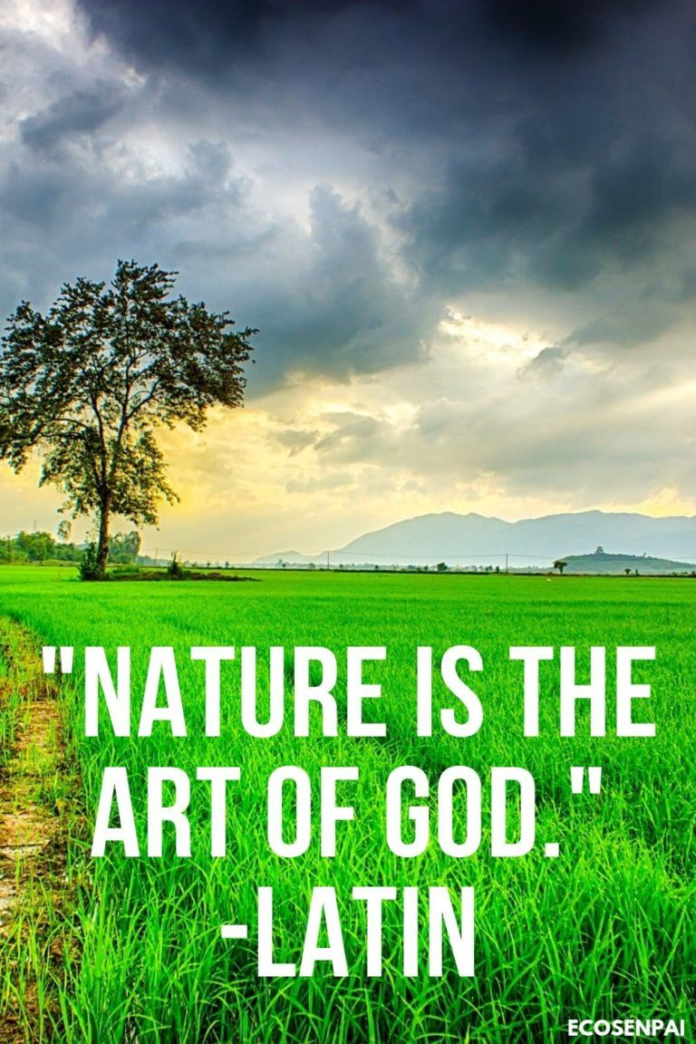Nature Quotes Inspirational Words Truths Of Life Nature Quotes Spiritual God Wisdom From Ecosenpai Nature Quotes Inspirational Nature Quotes Earth Day Quotes