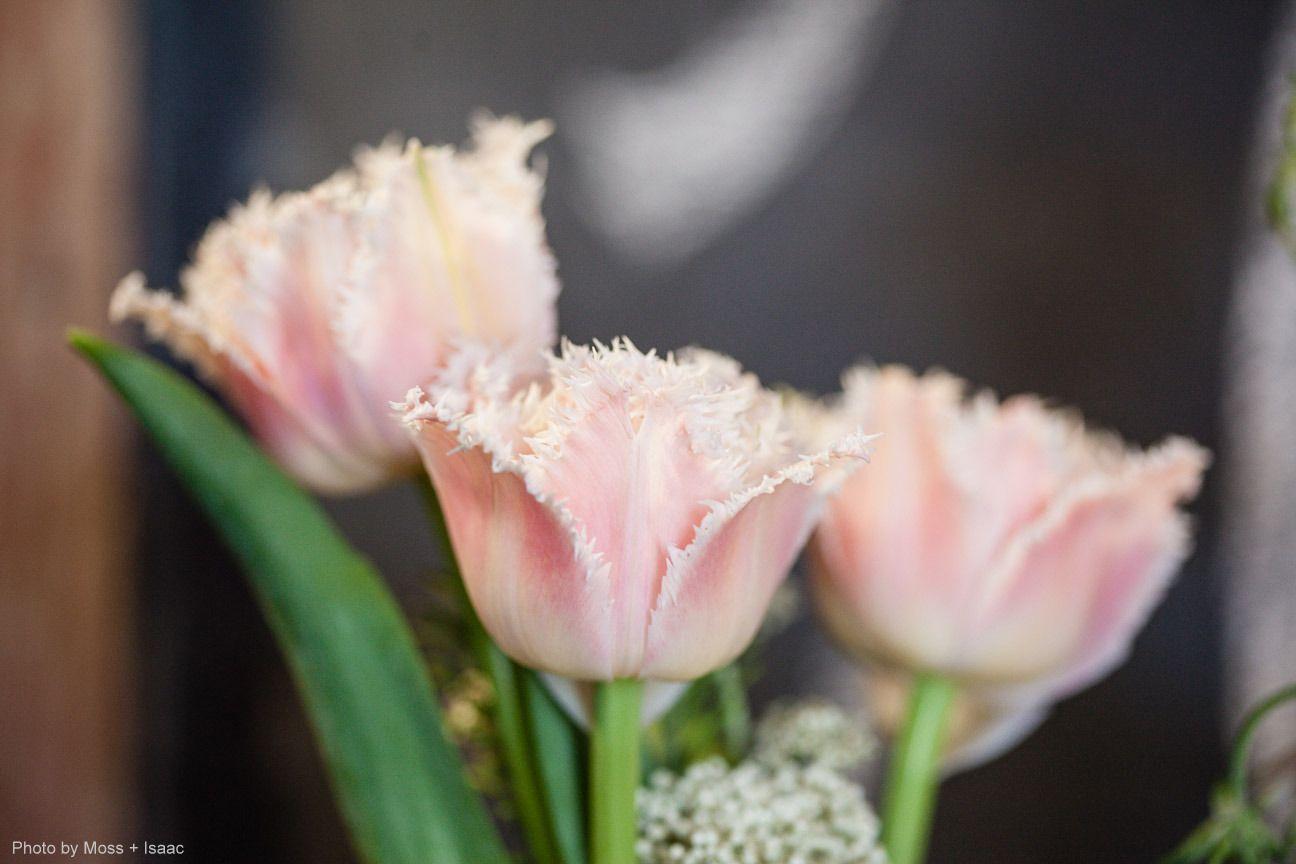 fringe tulips