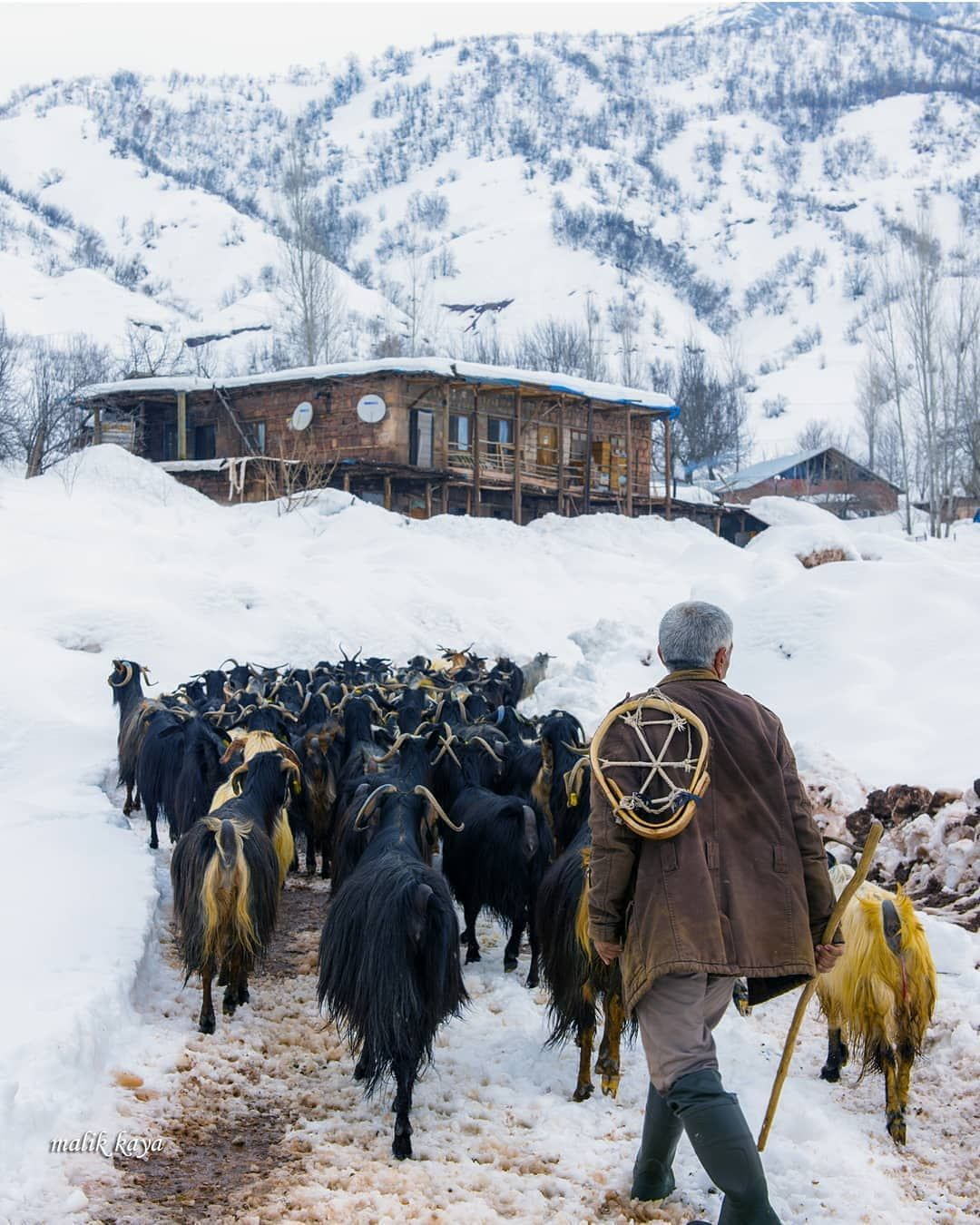617 Begenme 9 Yorum Instagram Da Anadolu Albumu Anadolualbum Suru Yolda Fotograf Malik Kaya Anadolualbum Instagram Horses Outdoor