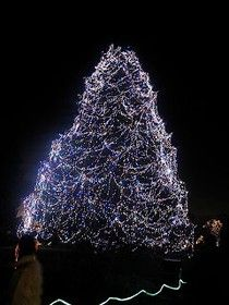 Lights Before Christmas at Toledo Zoo Turns on Tomorrow ...