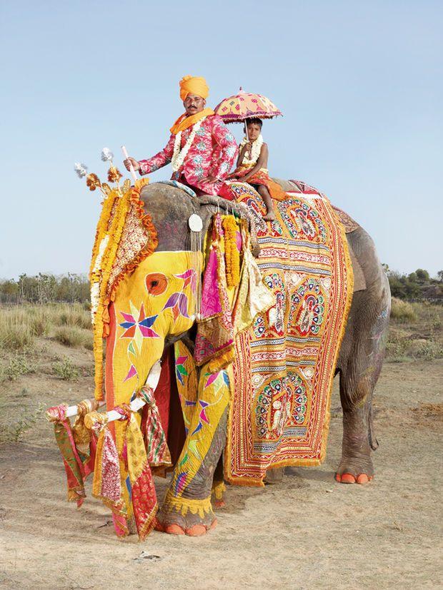 Portraits D'Éléphants Multicolores Pour Le Festival De Jaipur En