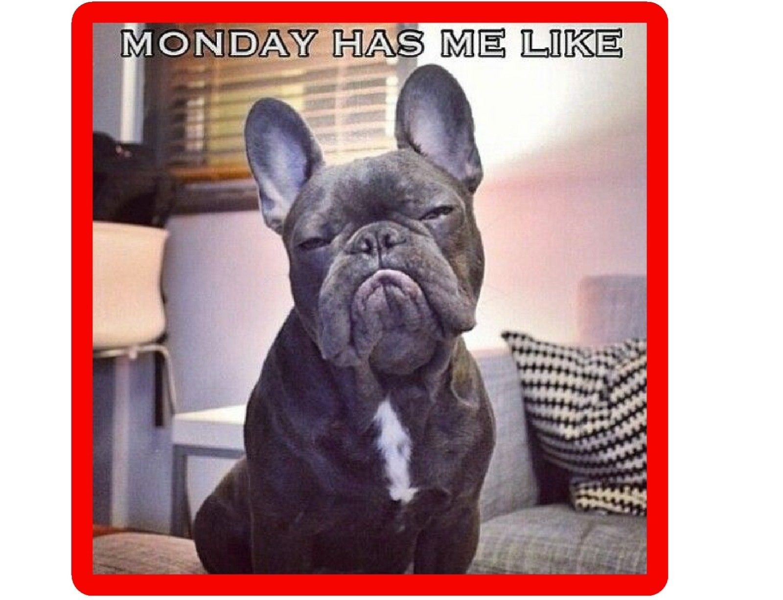 5 5 Funny French Bull Dog Monday Refrigerator Tool Box Magnet