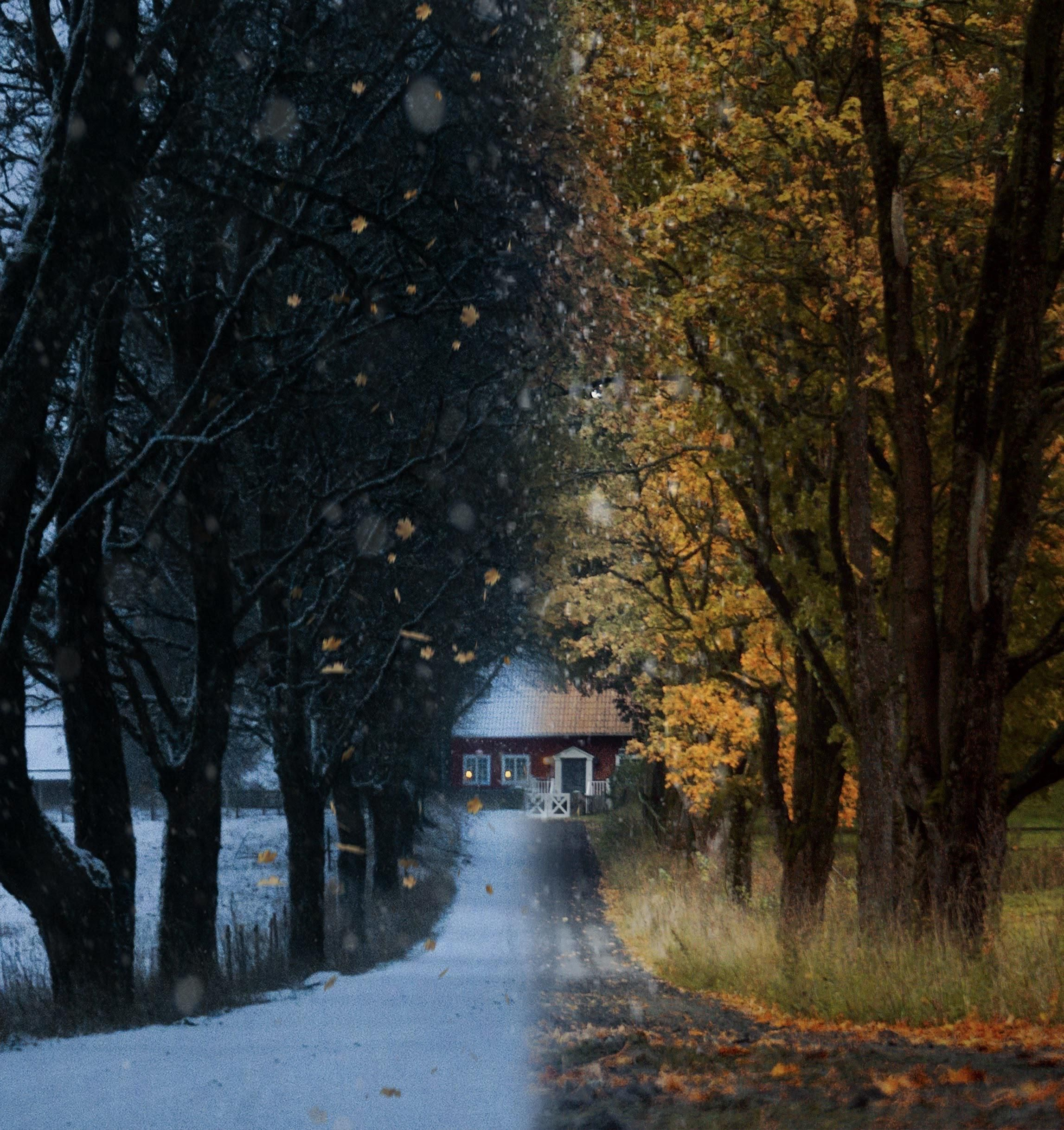 ITAP of a road leading to a house during different seasons.#PHOTO #CAPTURE #NATURE #INCREDIBLE