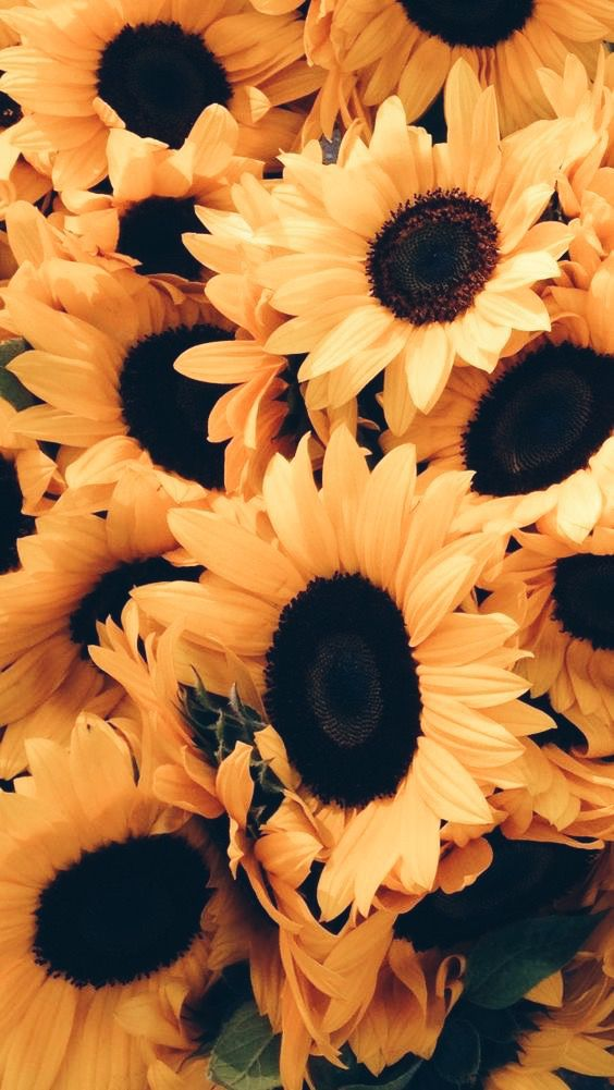 Cool sunflower wallpaper for iphone xs