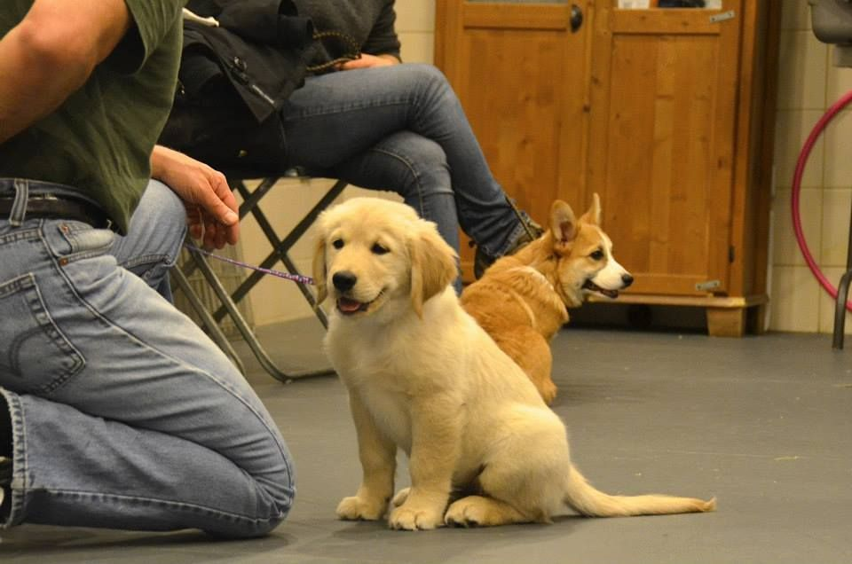 Puppies Dogs Puppyclasses Dogtraining Nyc Newyorkcity Puppy