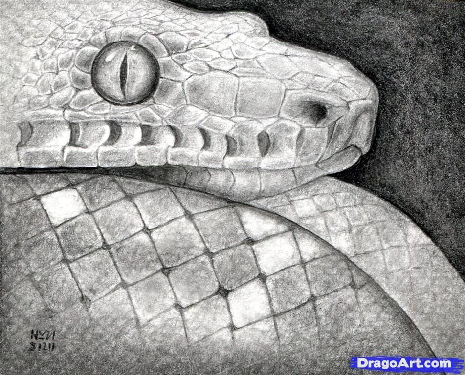How To Draw A Snake Head Step 16