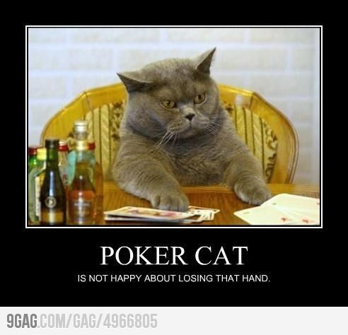 Poker cat is hissed about losing.