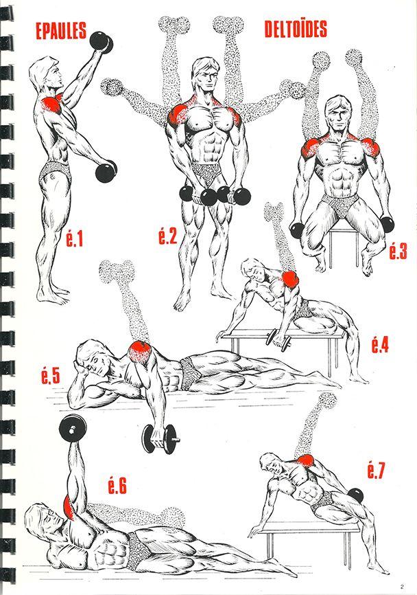 resultado de imagen de shoulder musculation ejercicios