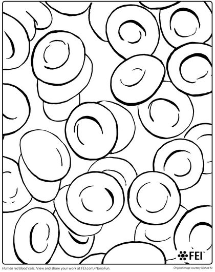 Red Blood Cell Coloring Page | laboratory coloring book | Pinterest