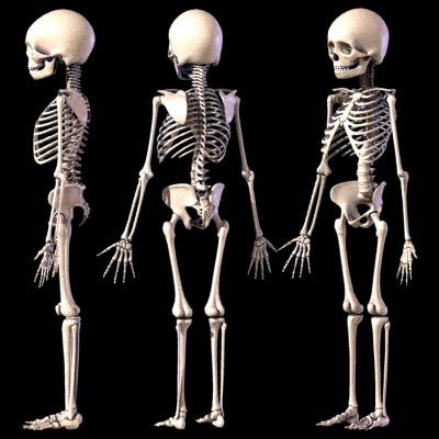5 years old skeleton - google search | anatomy | pinterest, Skeleton