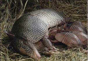 Animais vertebrados que amamentam os filhotes