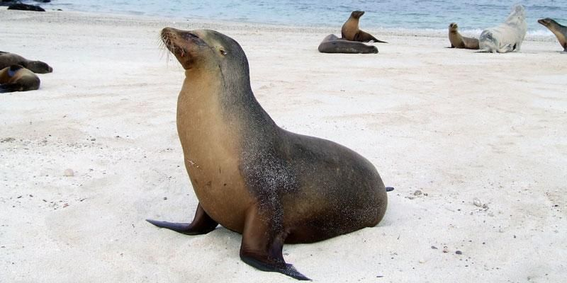 Tours Galapagos Islands California Native Plants Enchanted Island