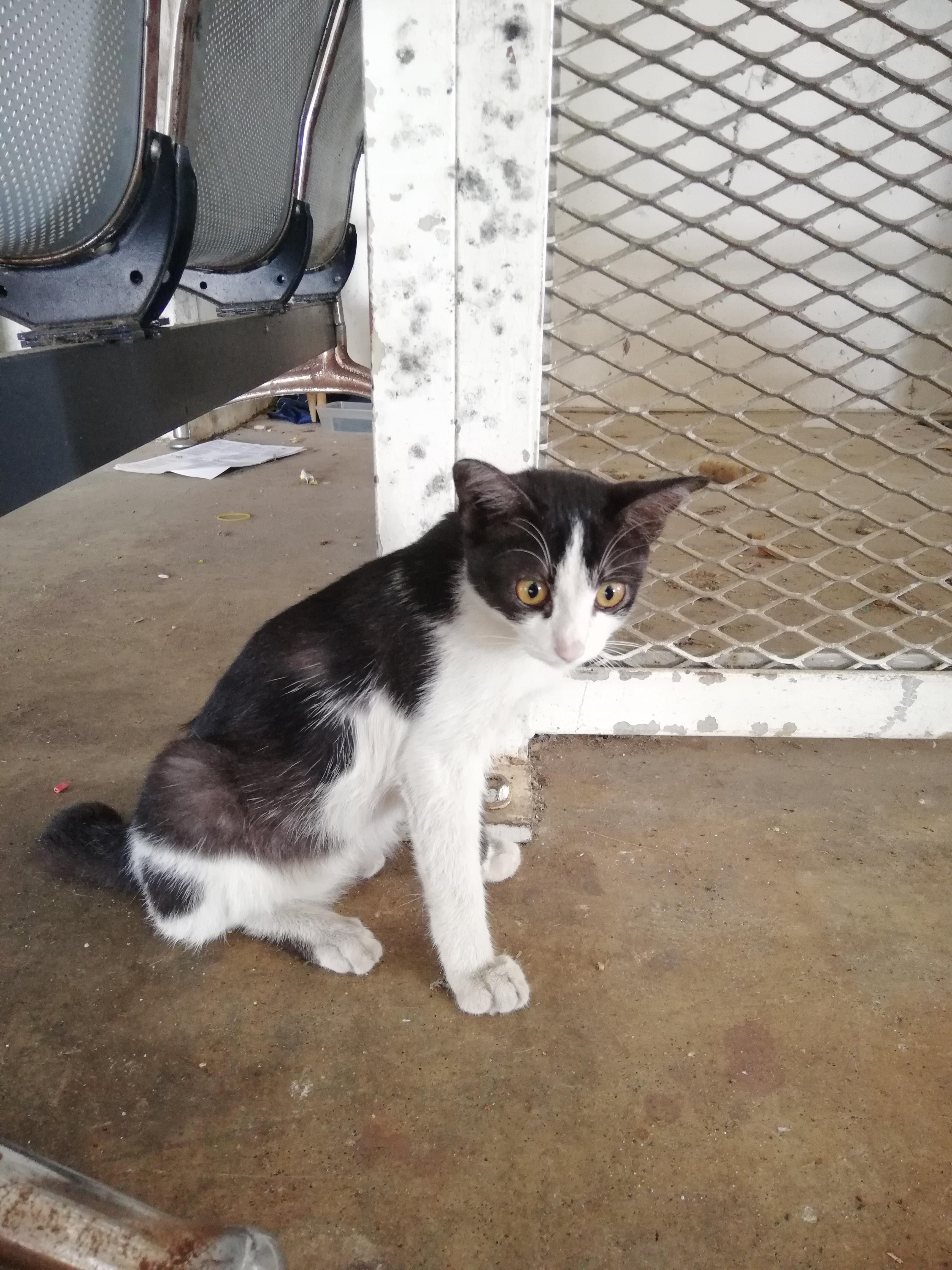 A Couple Days Ago A Stray Cat Picture At My Workplace Suddenly Couldn T Walk Or Move Both Of It S Rear Limbs So I Brought It To Neare Cat Pics Cats Stray Cat