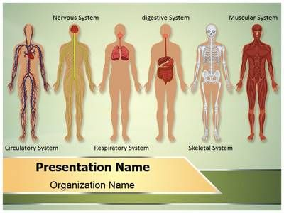 Check out our professionally designed and world class human body this human body systems ppt template comes with different slides of editable graphs charts and diagrams to help you in making powerful presentation toneelgroepblik Image collections
