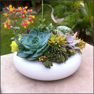 impressive design modern succulent planter. Our Succulent mix in 9 round white pot makes an amazing decoration for a  center piece modern or contemporary setting Mix Dia x 2 5 H Contemorary Pot