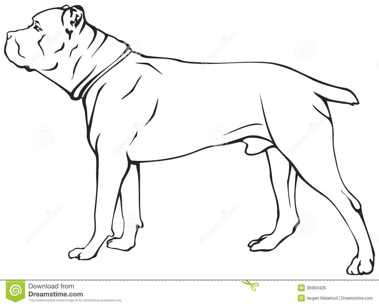 disegni da colorare di cane corso