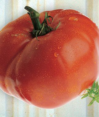 ab64d3496c794a98dbfdb23c22c65152 - Gardeners World Magazine Free Tomato Seeds