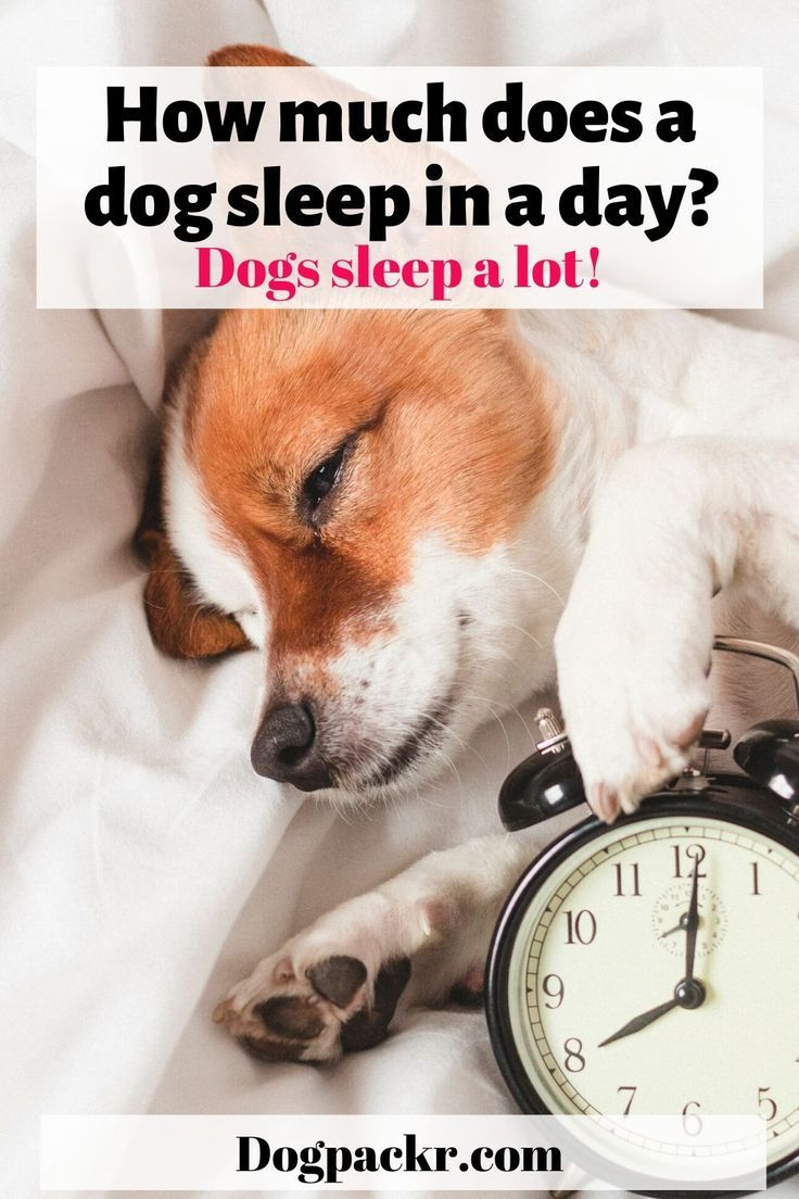 How many hours a day should a dog sleep? in 2020