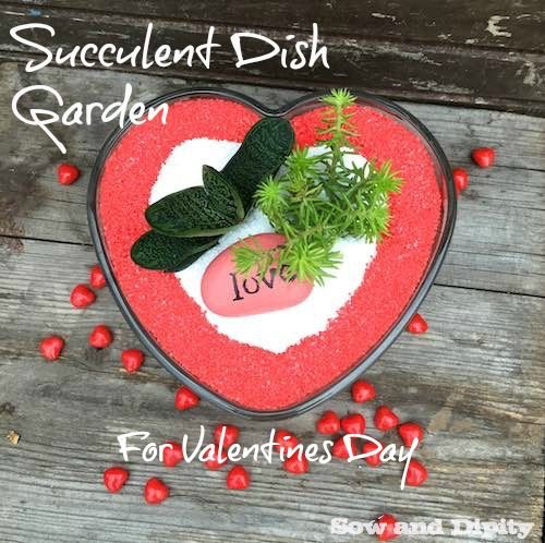 Succulent Dish Garden For Valentines Day - Sow and Dipity