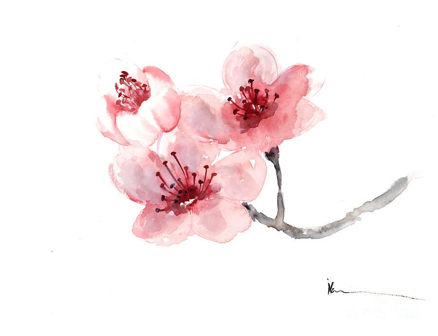 Image Result For Cherry Blossom Tattoo Watercolor Cherry Blossom