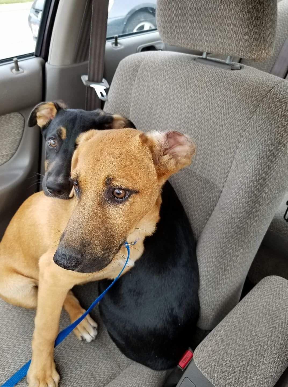 Labrador Retriever Dog For Adoption In Newport Ky Adn 659633 On Puppyfinder Com Gender Male Age Bab With Images Dog Adoption Labrador Retriever Dog Labrador Retriever