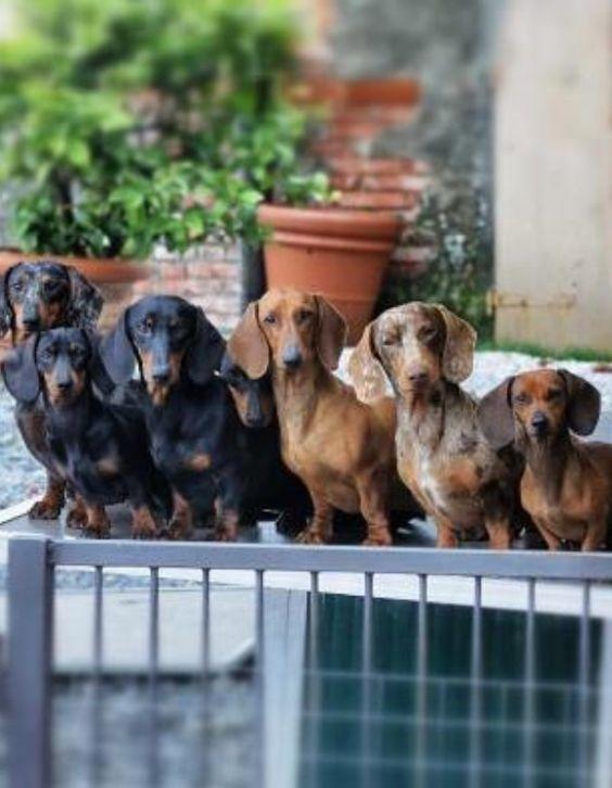 30 Animals Posing to The Camera Like Models #animalcaptions