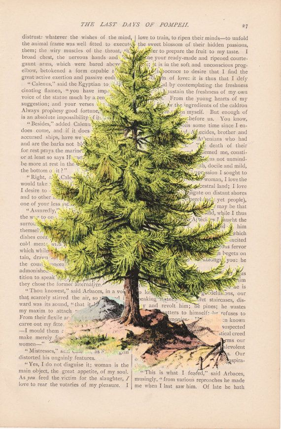 Christmas Decor Dictionary Art Vintage Pine By ExLibrisJournals Tree IllustrationVintage