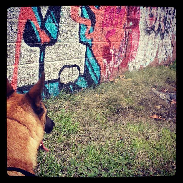 http://www.instagram.com/ilovemalinois  #grafitti #tagging #lurking #malinoisdog #ilovemalinois #maligator #belgianmalinoislove #belgianmalinois #belgianmalinoisofinstagram #malinois #malinoispuppy #malinoislovers #malinoislove #malinoisdog #malinoislife #malinoislifestyle #malinoisofinstagram #germanshepherd #ptsdservicedogintraining #ptsddog #servicedog #therapydog #puppylove #puppiesofinstagram #dogsofinstagram #workingdog #agilitydog #schutzhund #frenchring