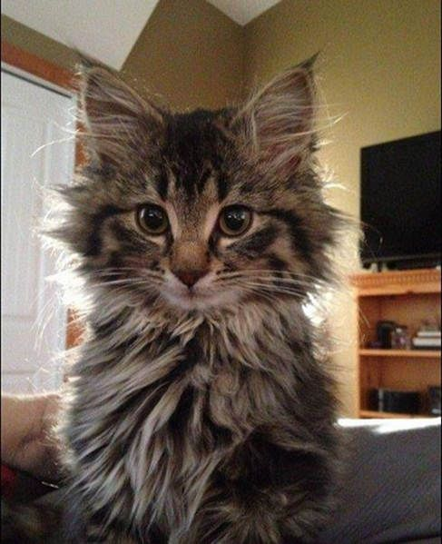 Memiuex The Cat From Living A Feral Life To Finding Her Forever Home Feral Cats Cats Pretty Cats