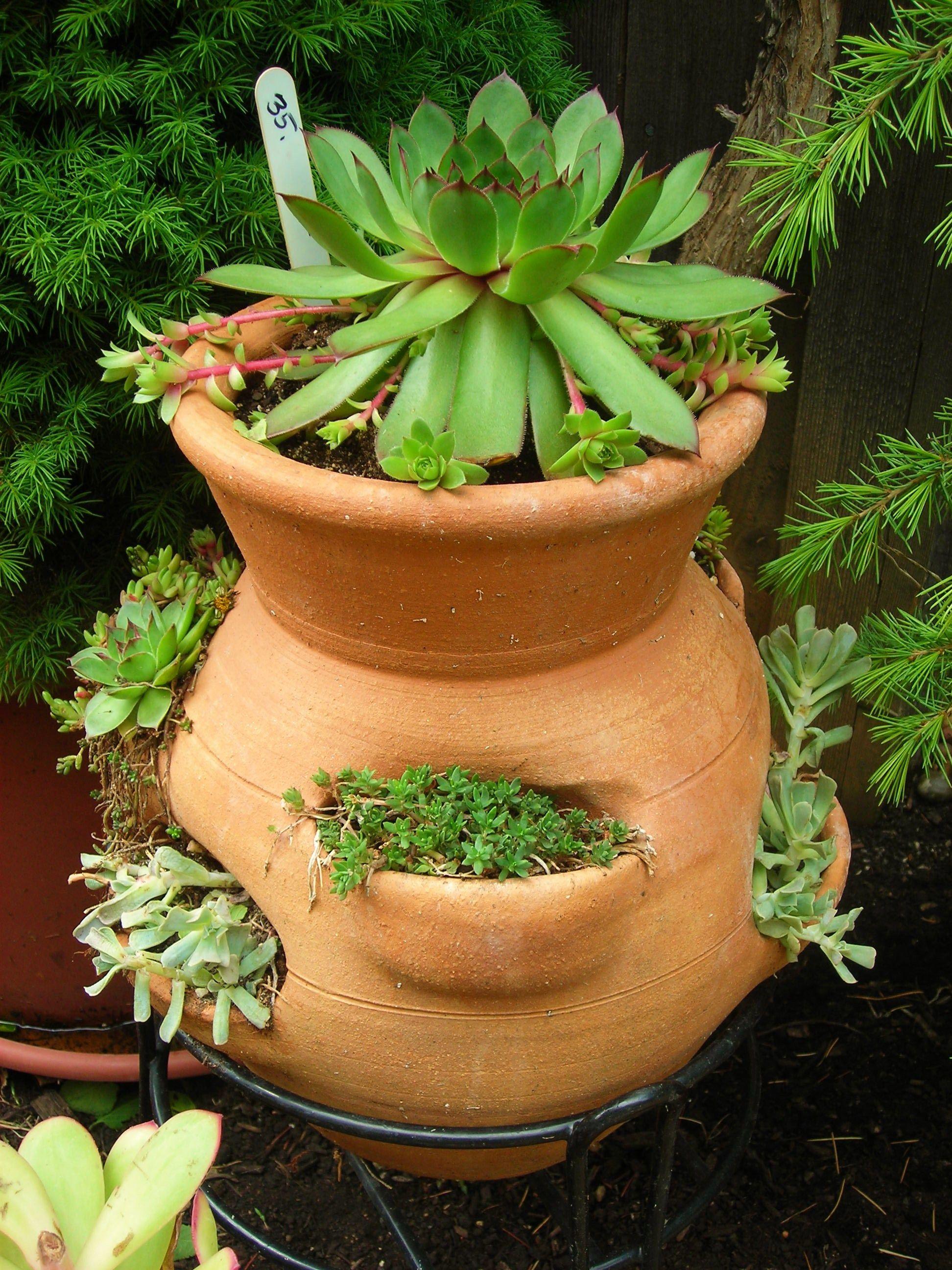Try A Sedum Garden In A Strawberry Pot Sedum Garden Strawberry Pots Sedum