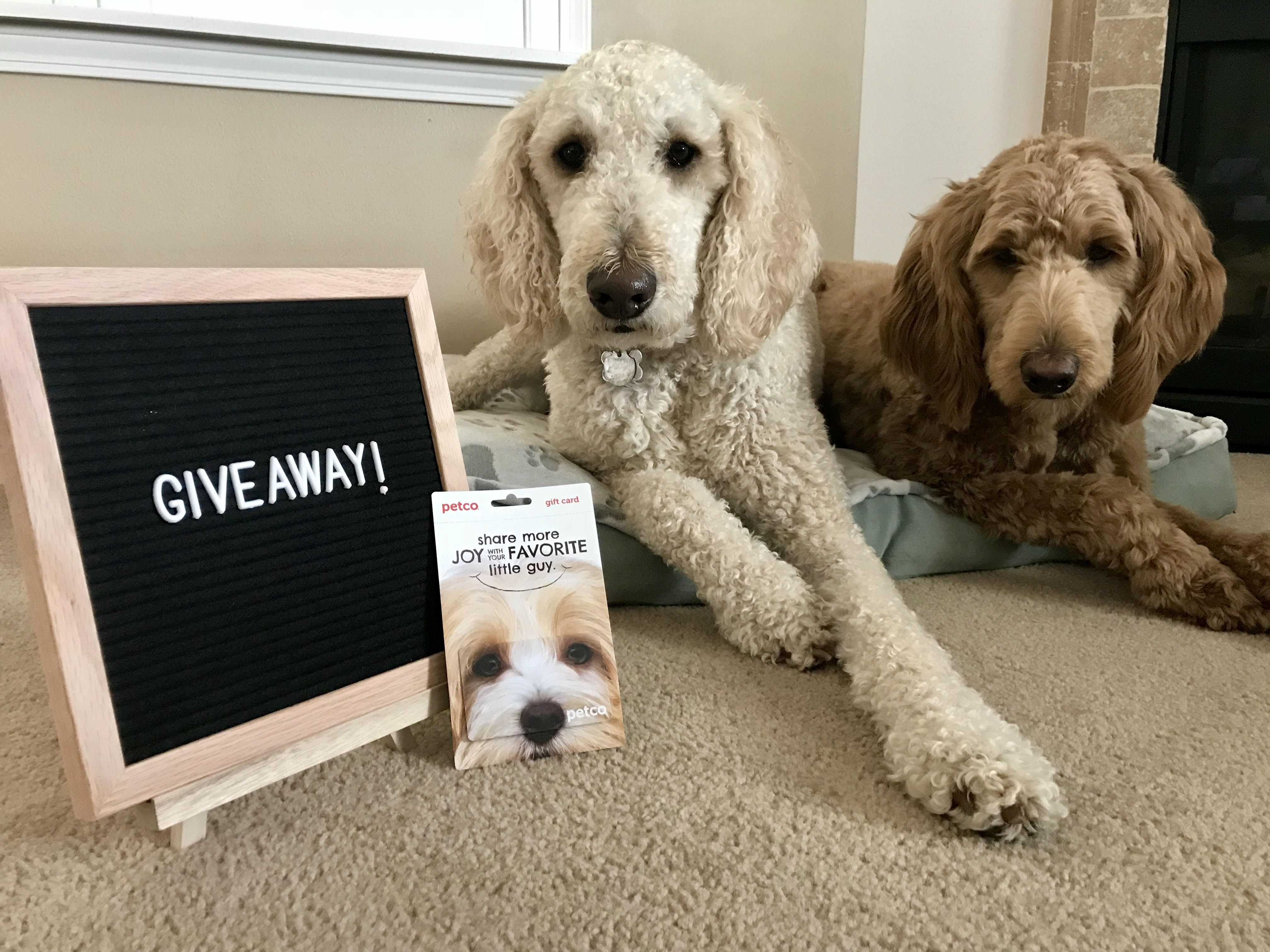 Enter To Win A 50 Petco Gift Card 10x10 Felt Letter Board 95 Petco Sweepstakes Giveaways Giveaway Contest