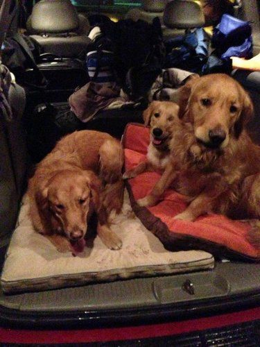 Comfort Dogs Sent To Newton Connecticut Wet Nose Waggly Tail