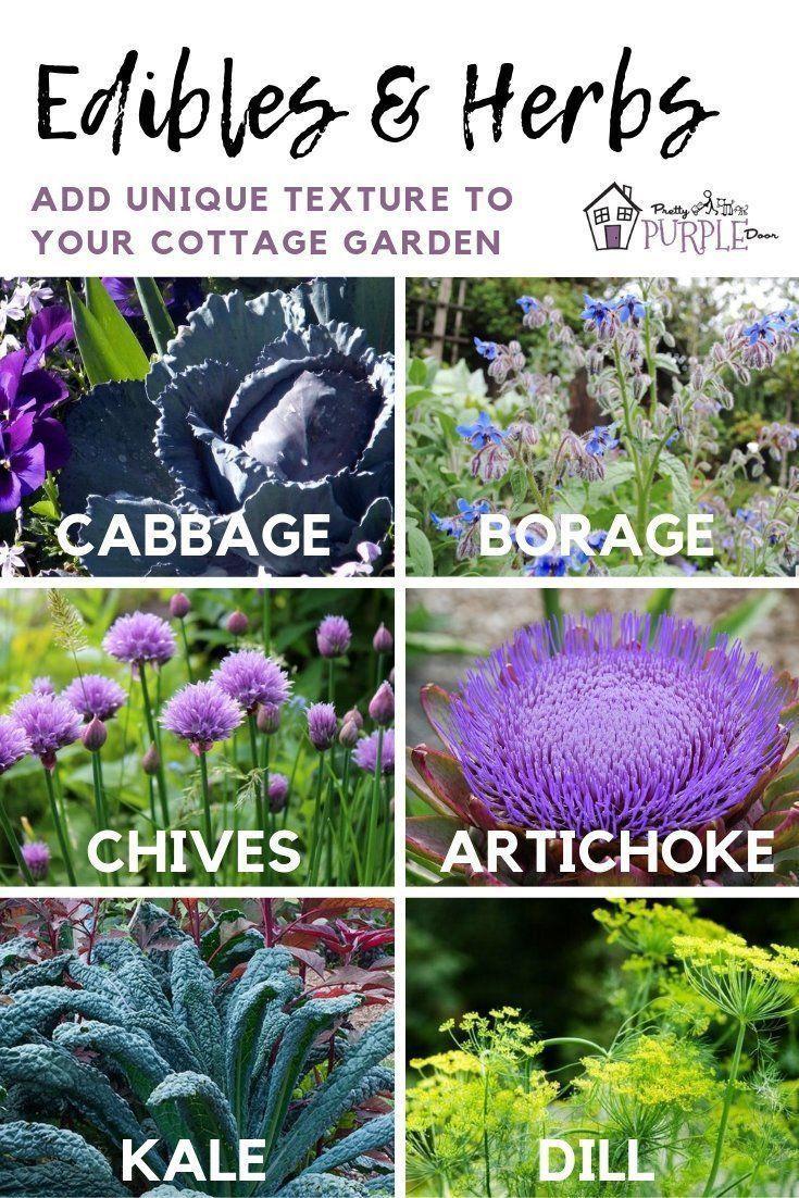 13 plants Texture landscapes ideas