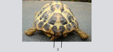 sur le site d information vous trouverez toutes les informations utiles sur la tortue de terre