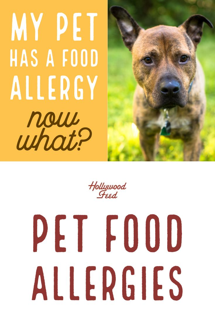 What are Food Allergies and How Do I Stop Them? Food