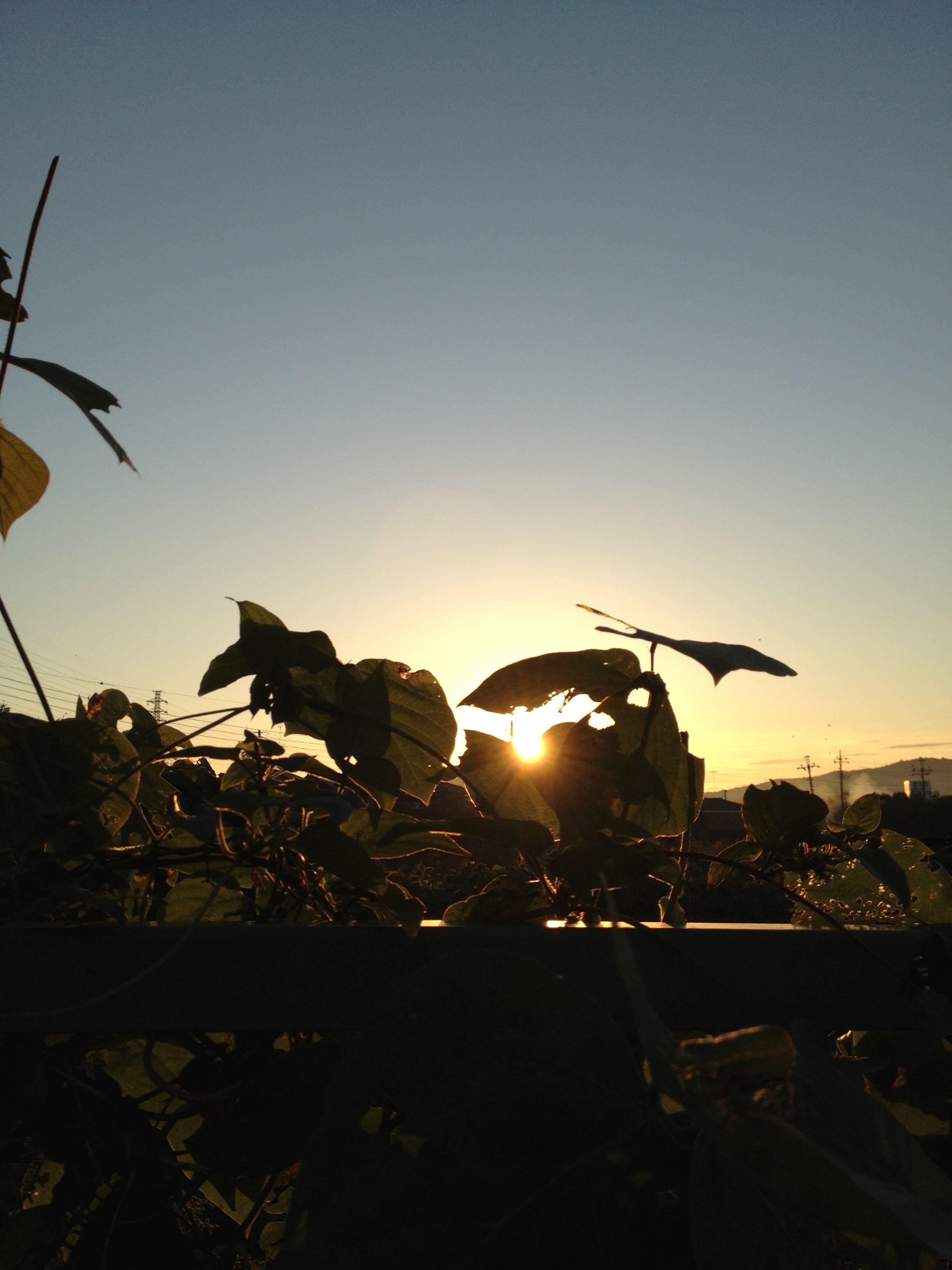 朝陽を捕まえる:魚の庭 2012-10-20