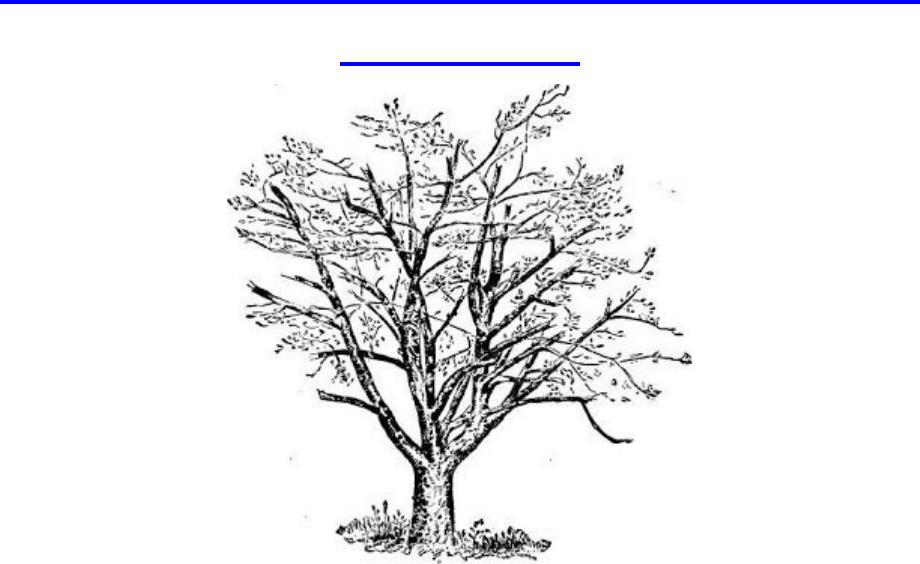 Tips Menggambar Pohon Psikotes Tes Psikotes Gambar Psychologymania 6 Tes Psikologi Populer Di Seleksi Penerimaan Karyawan Dan Menggambar Pohon Gambar Pohon