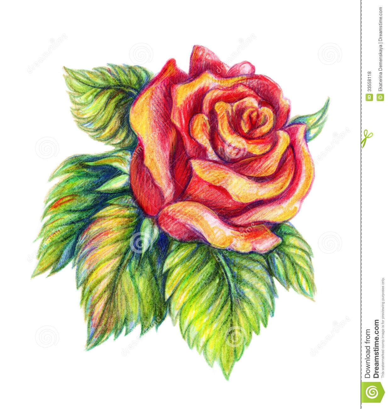 Colored Pencil Drawings Google Search Pencil Drawings Of Flowers Realistic Flower Drawing Beautiful Flower Drawings